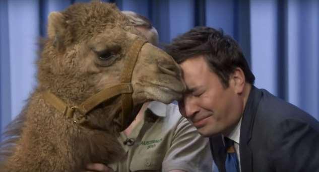 13 милых фактов о знаменитостях, которые души не чают в животных
